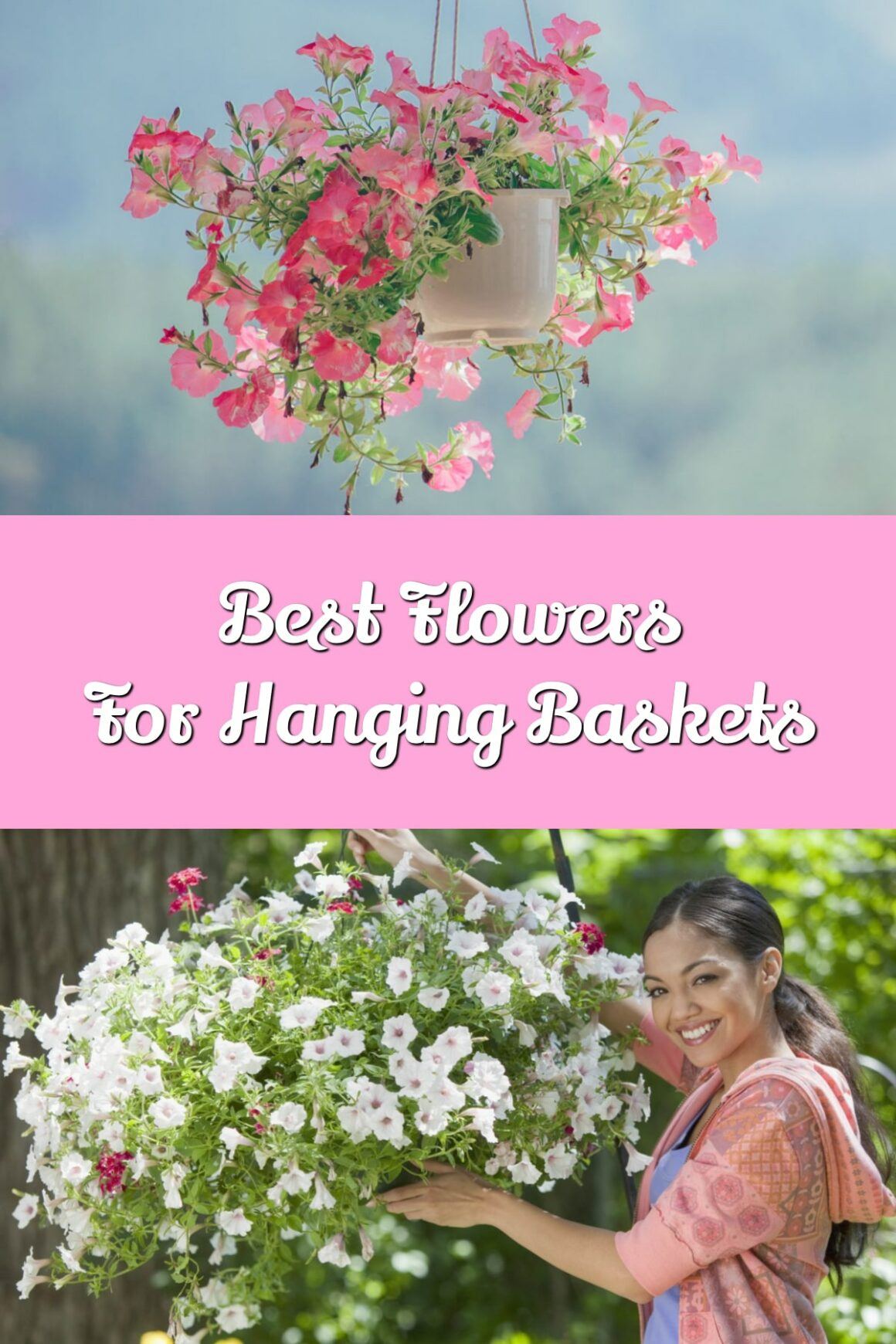 Best Flowers For Hanging Baskets