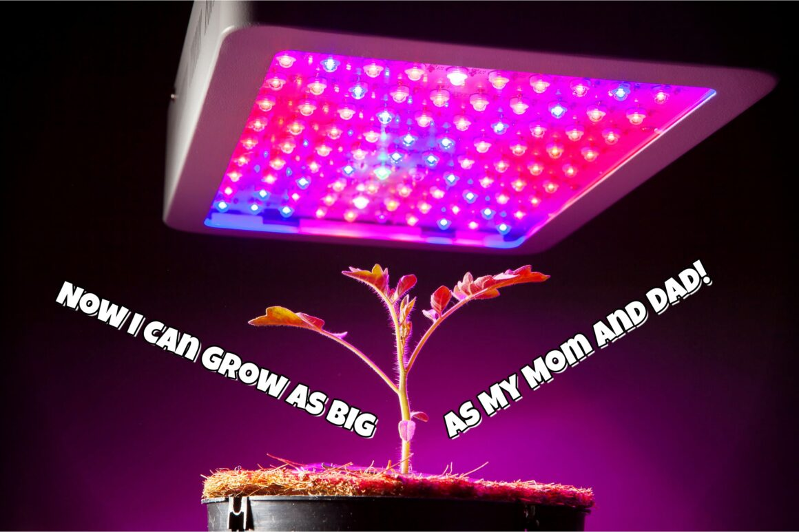 Growing Plants In Artificial Light LED Grow Light