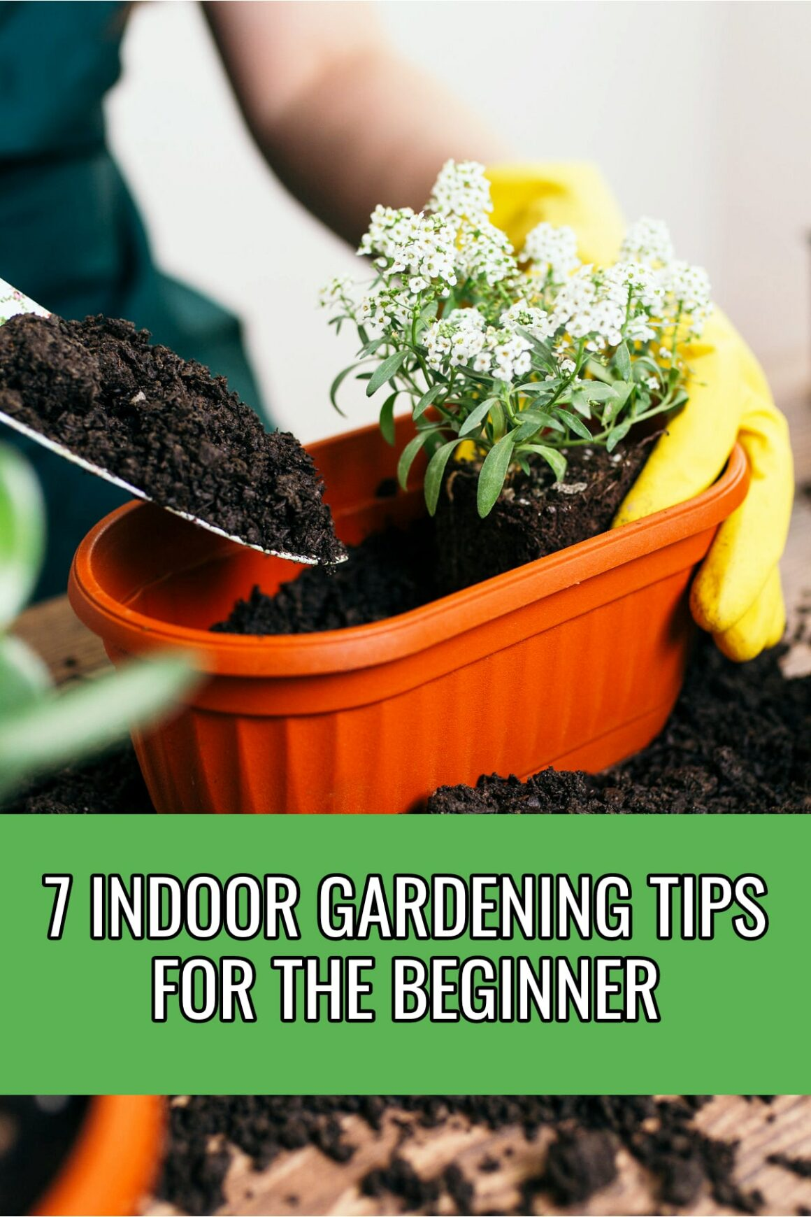 Indoor Gardening Tips For The Beginner