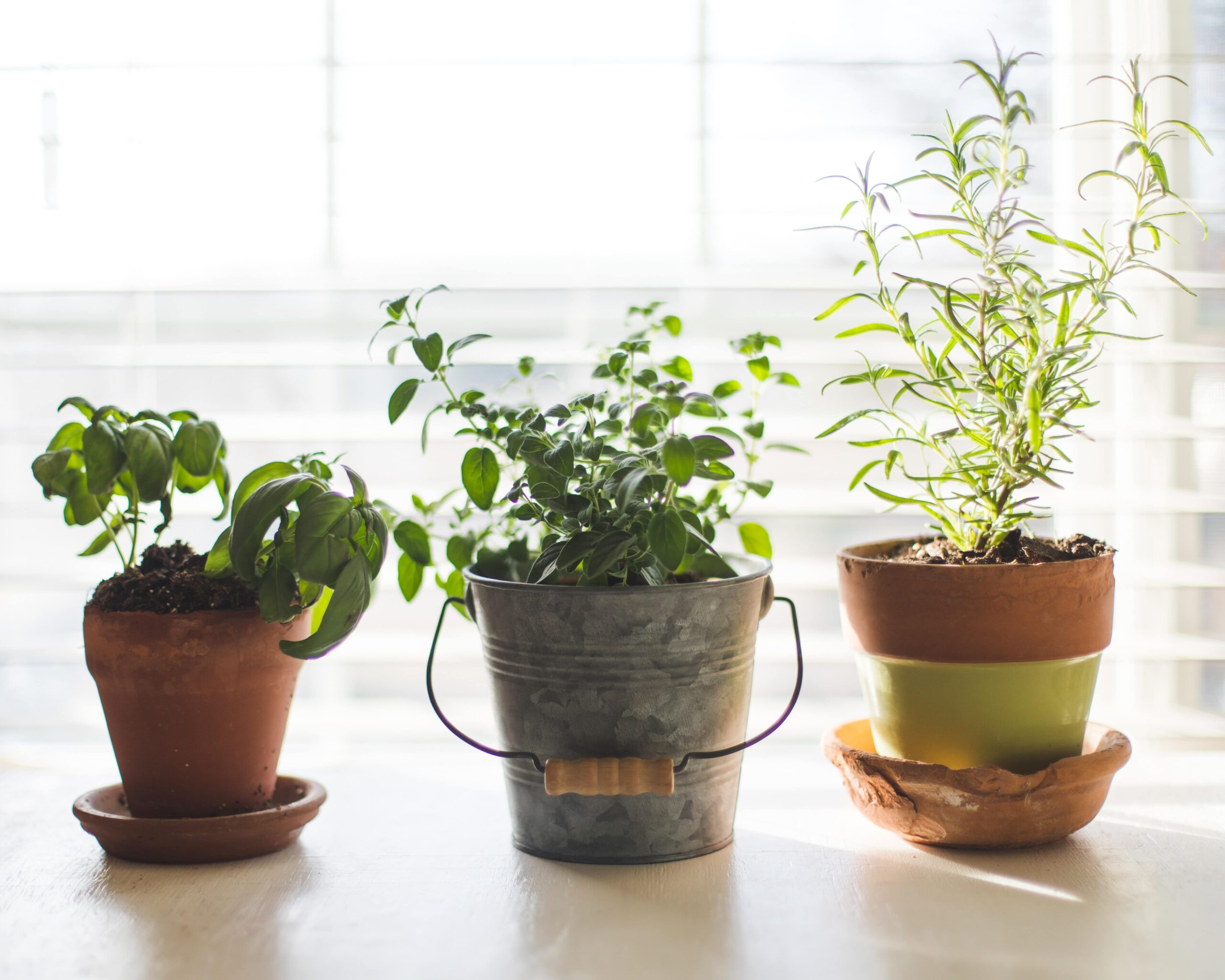 Plants In Pots (Successful Indoor Gardening)