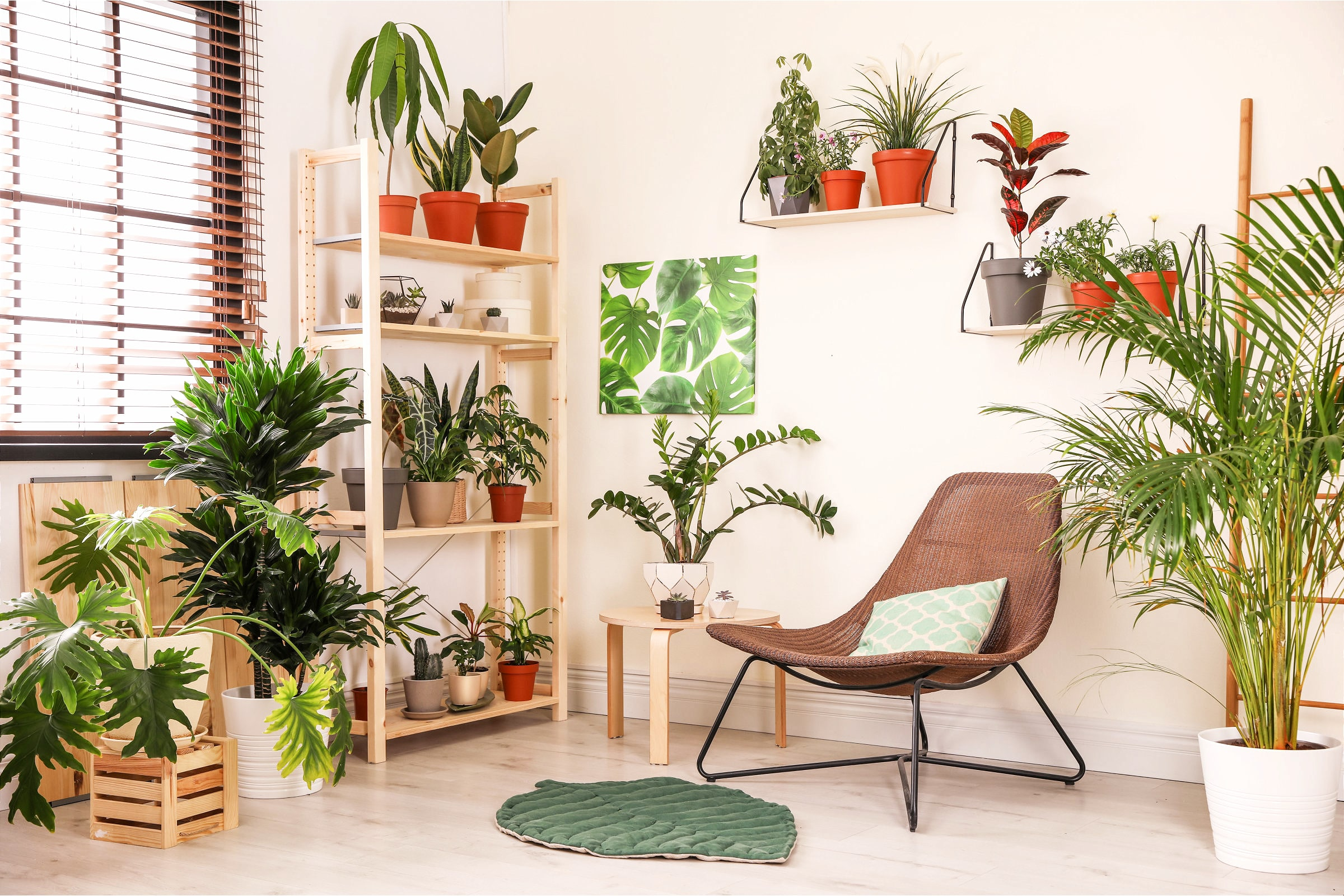 A Living Room With Plants
