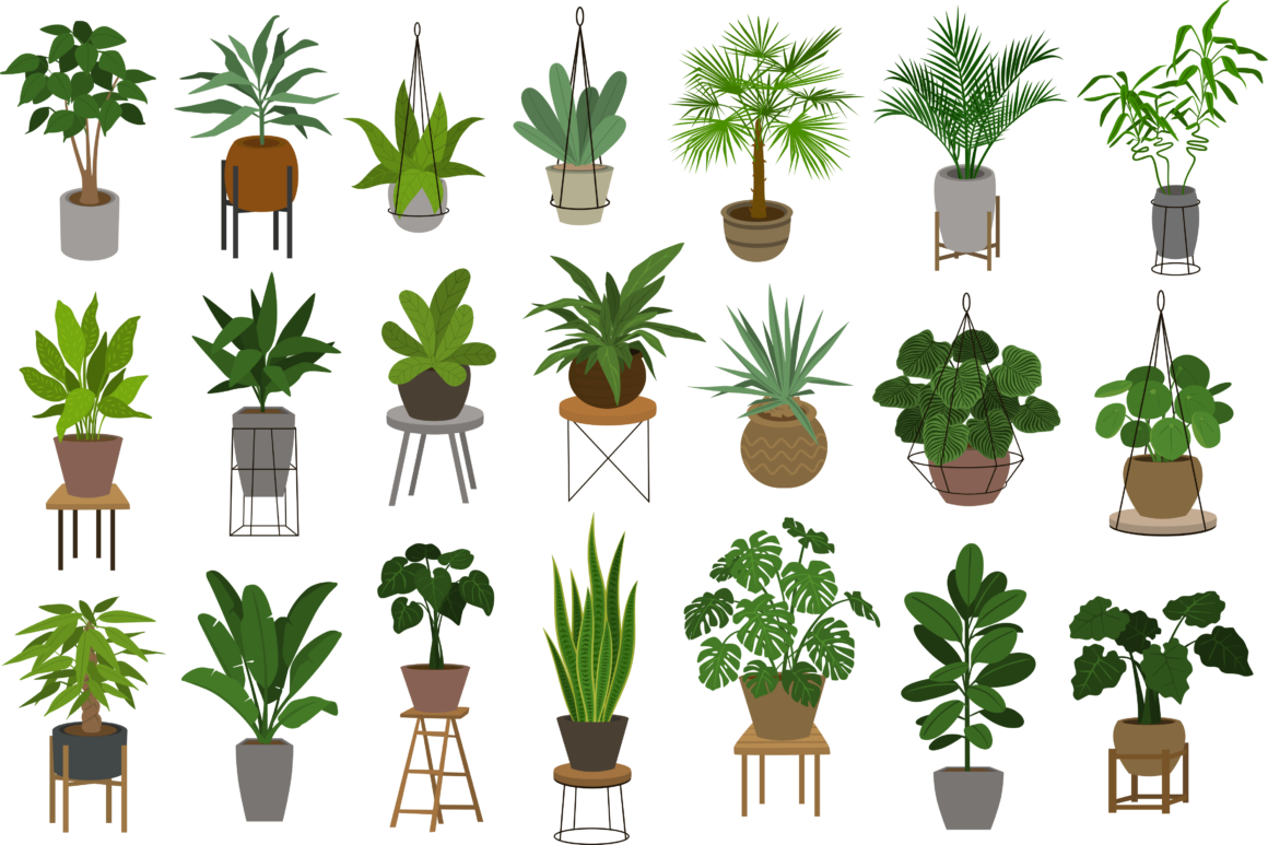 Different Plants In Pots - What Is Indoor Gardening?