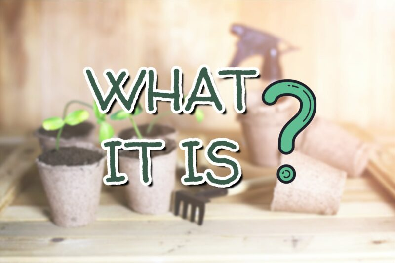 What Is Indoor Gardening?