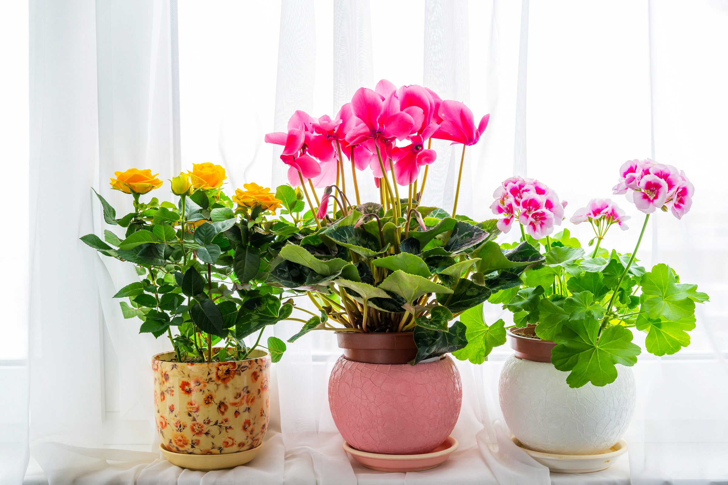 Potted Flowers On A Windowsill
