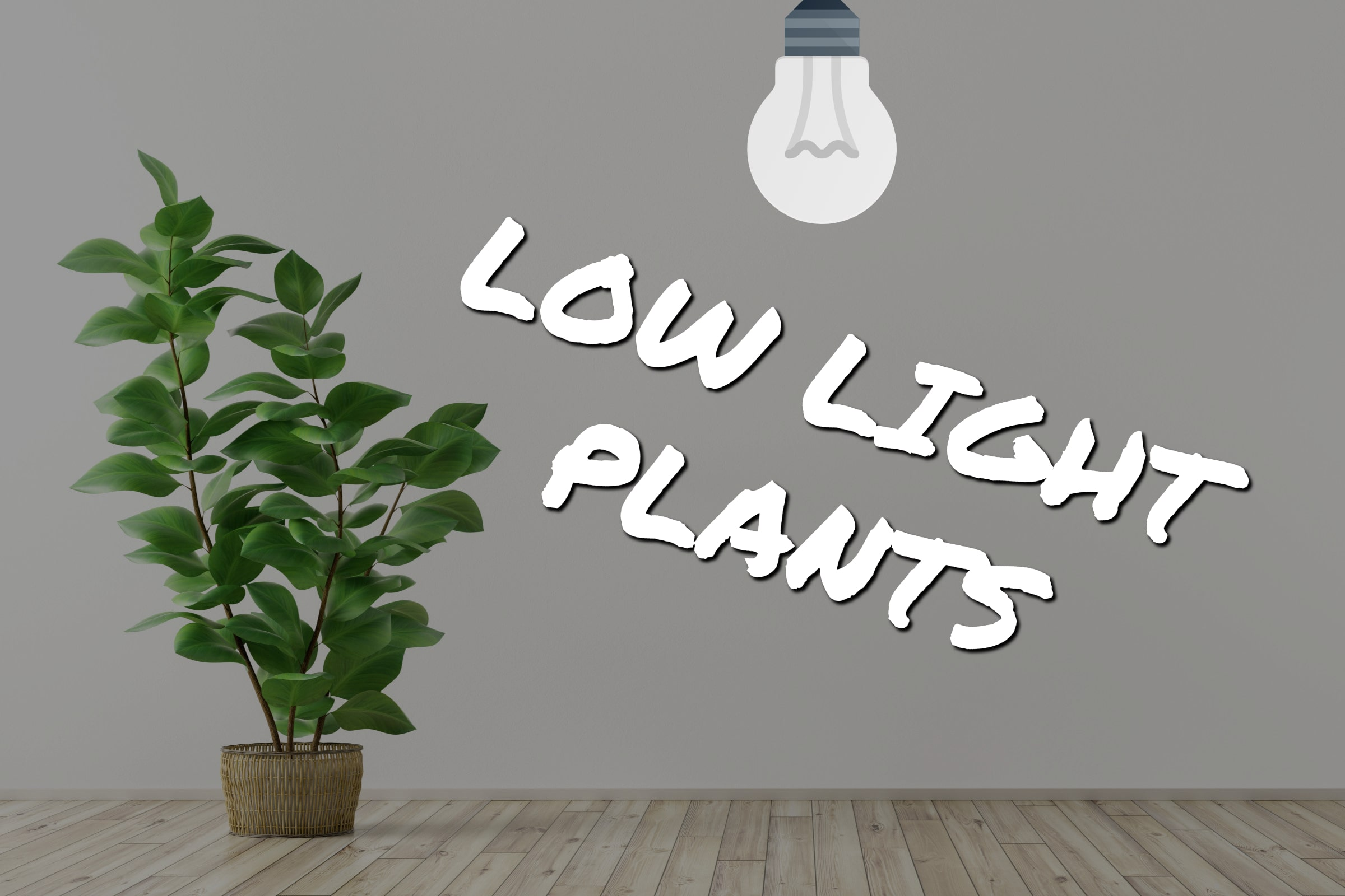 Low Light Plants