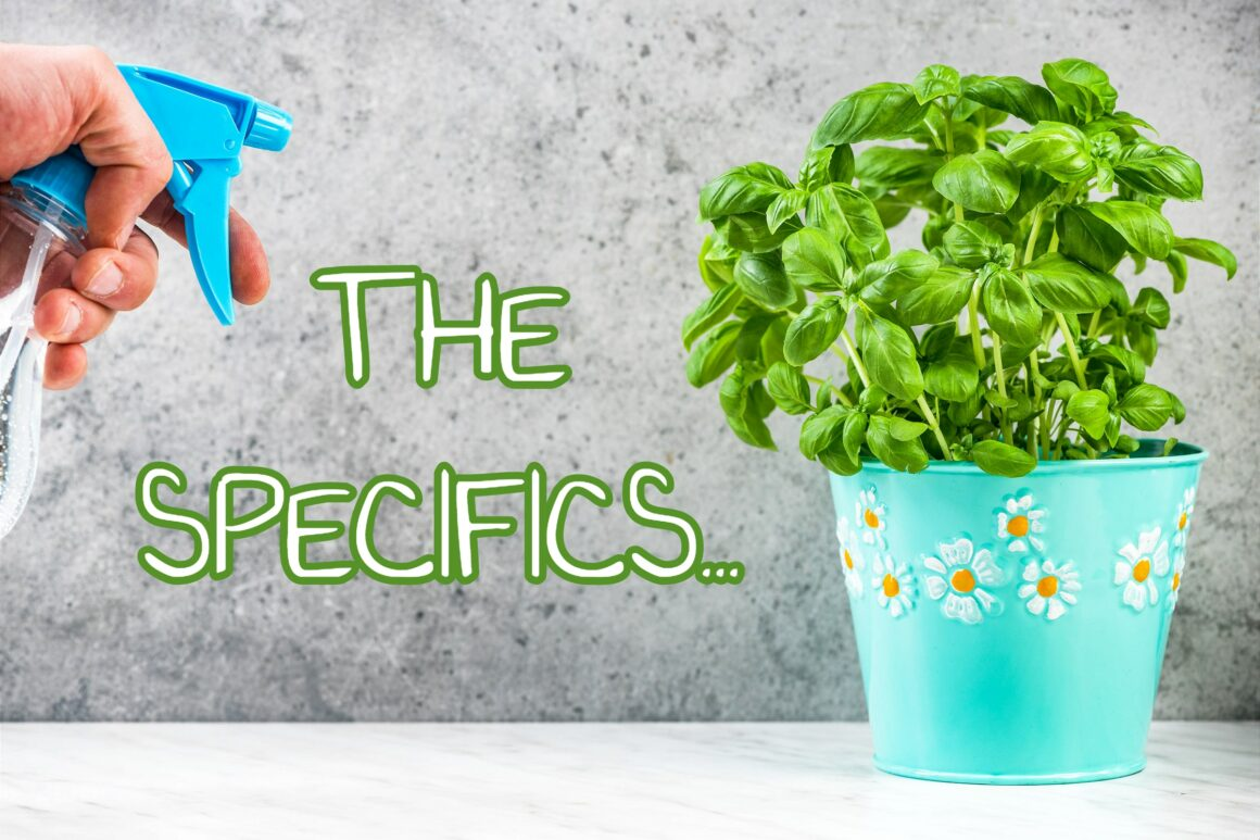 How To Grow Basil Indoors – The Specifics
