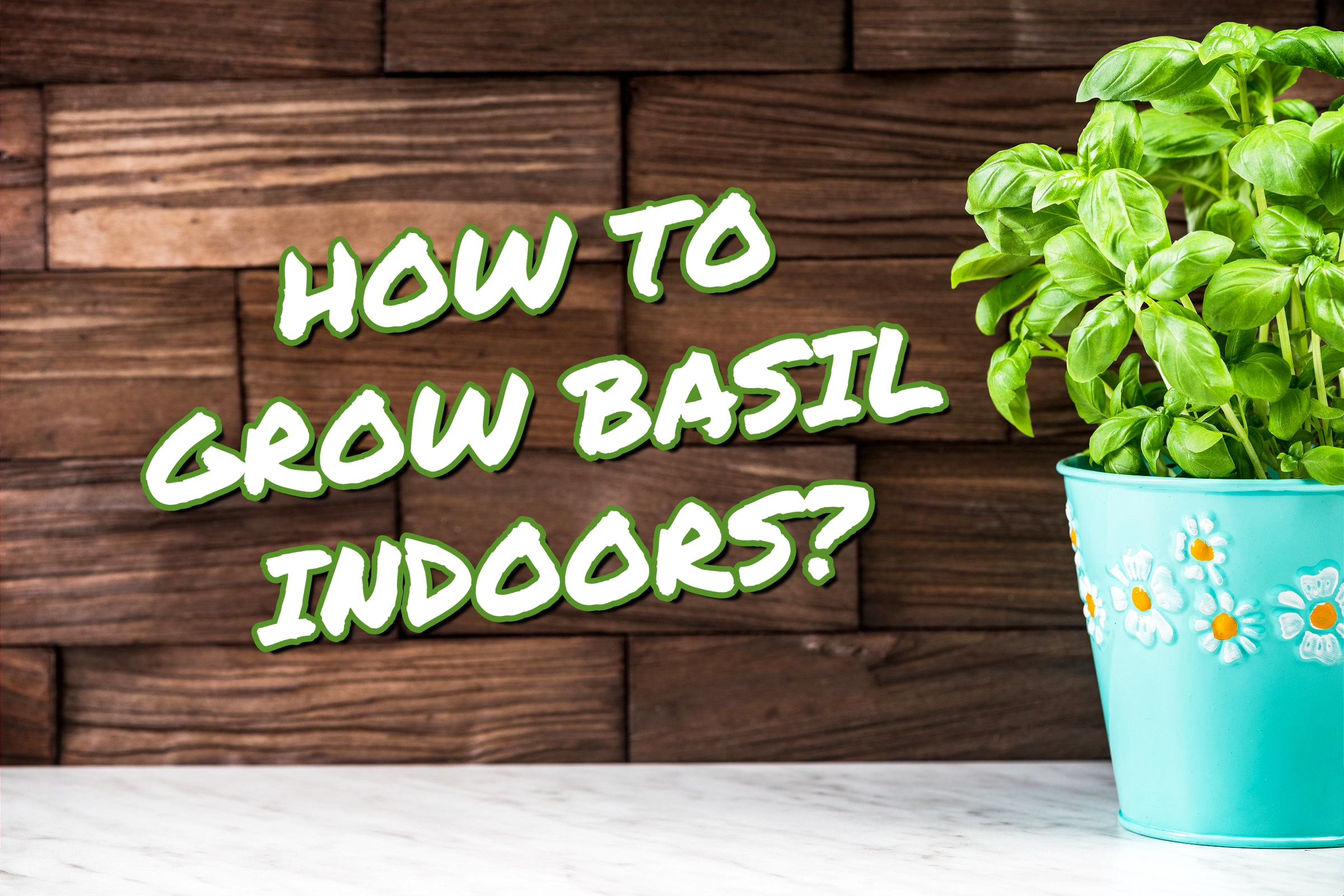 How To Grow Basil Indoors (Basil Pot On The Right)