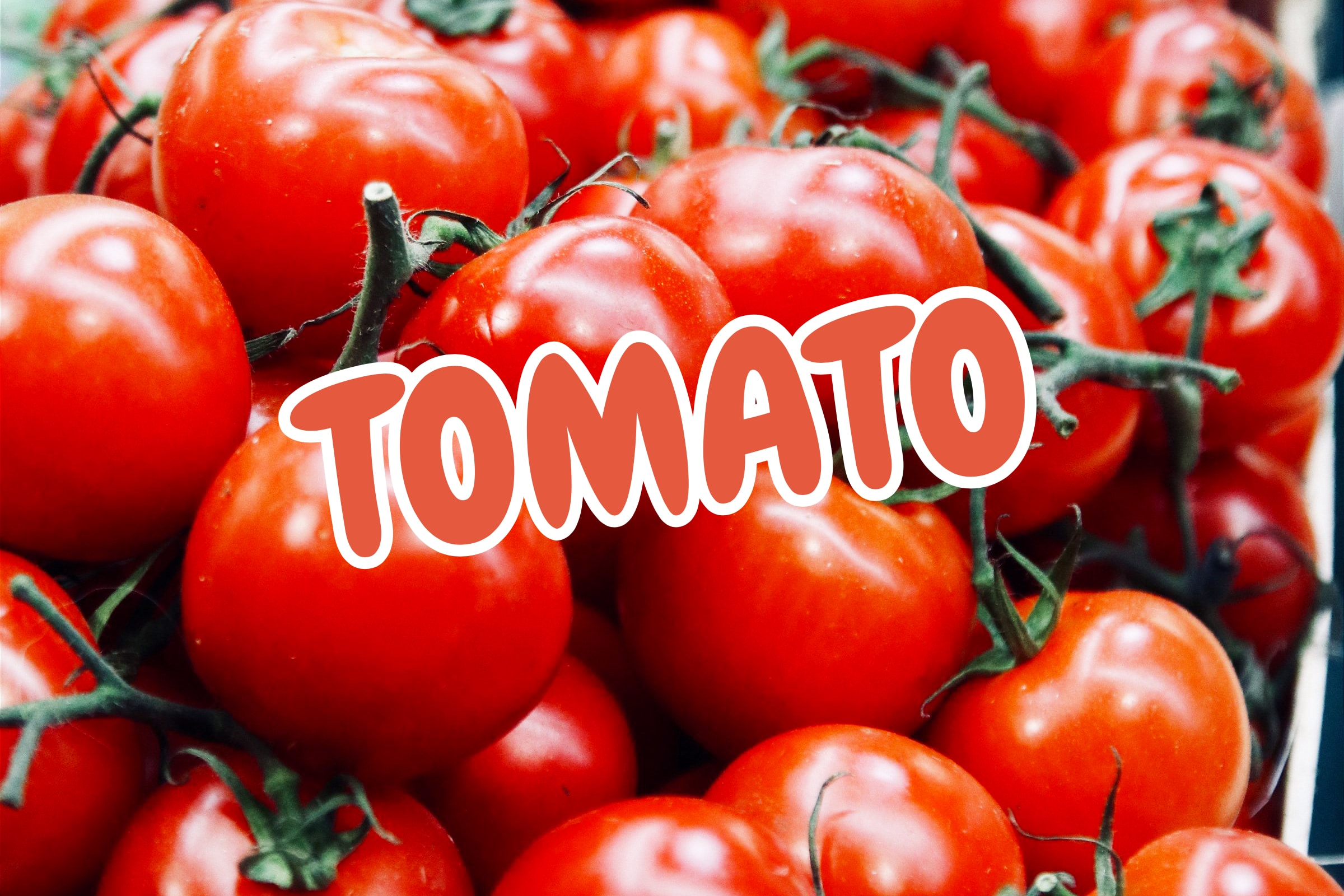 What Is The Tomato Plant?