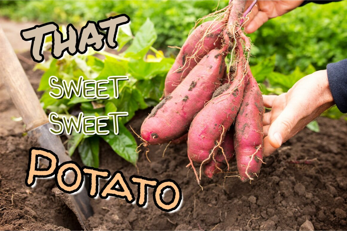 That SWEET SWEET Potato