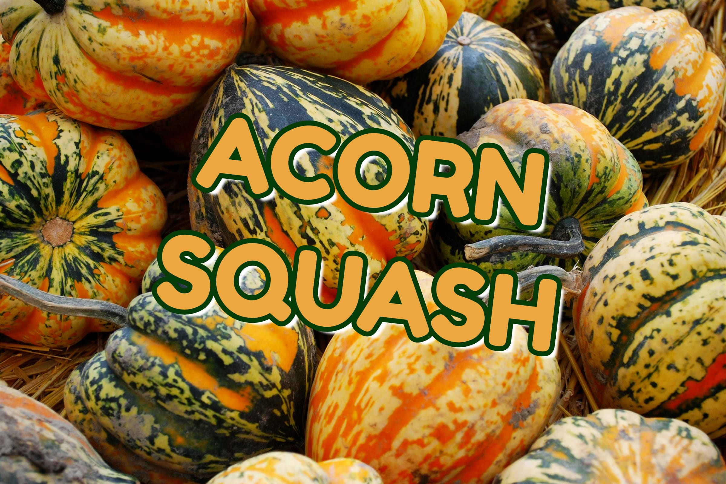 What Is The Acorn Squash Plant?