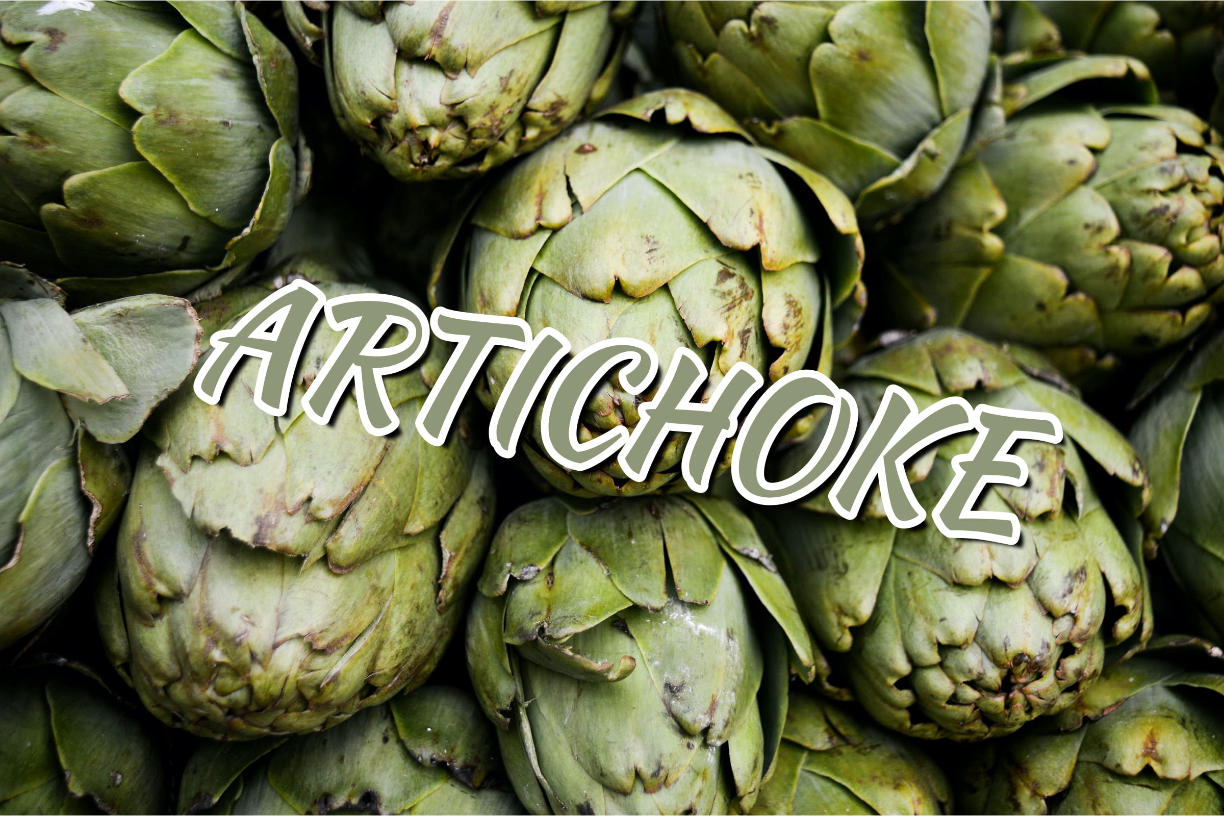 What Is The Artichoke Plant?