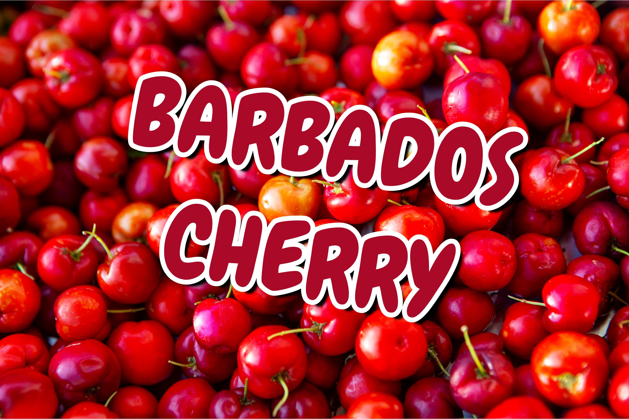 What Is The Barbados Cherry Plant?
