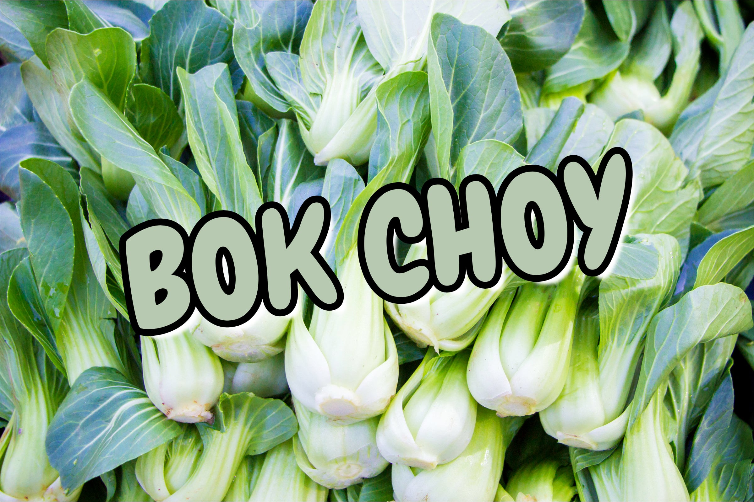 What Is The Bok Choy Plant?