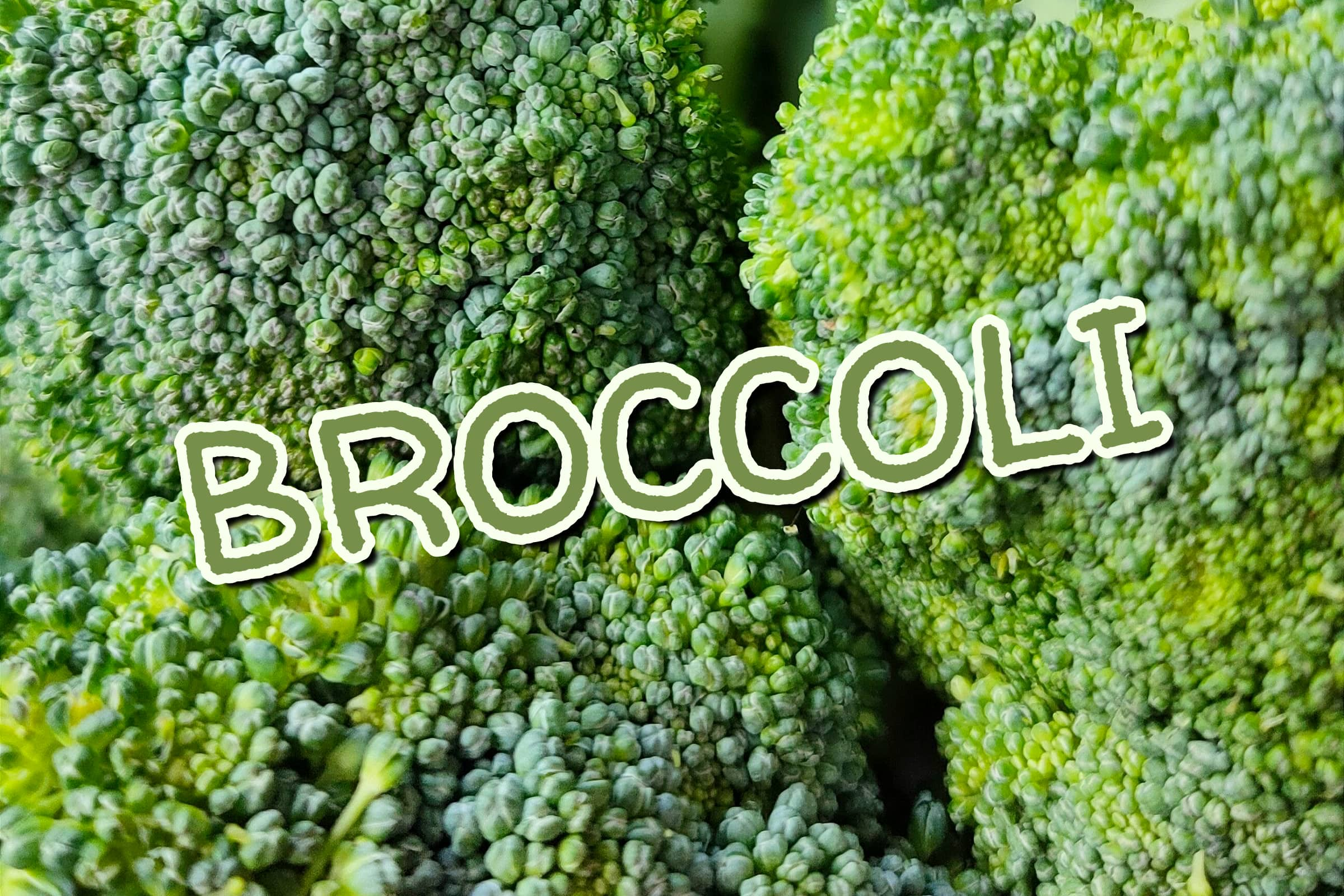 What Is The Broccoli Plant?