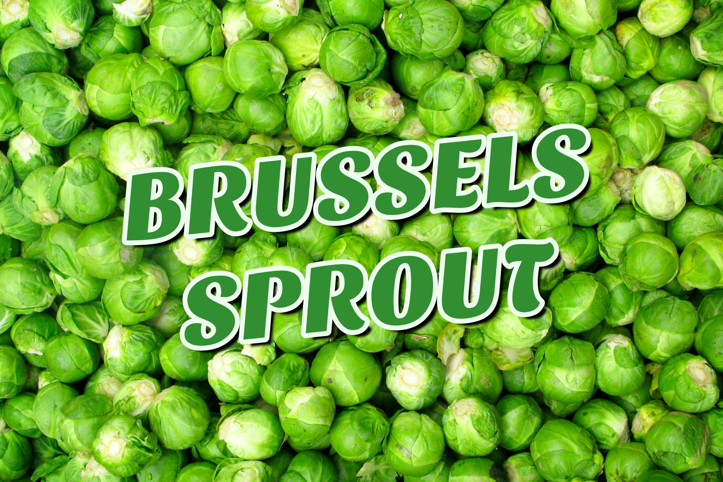 What Is The Brussels Sprout Plant?