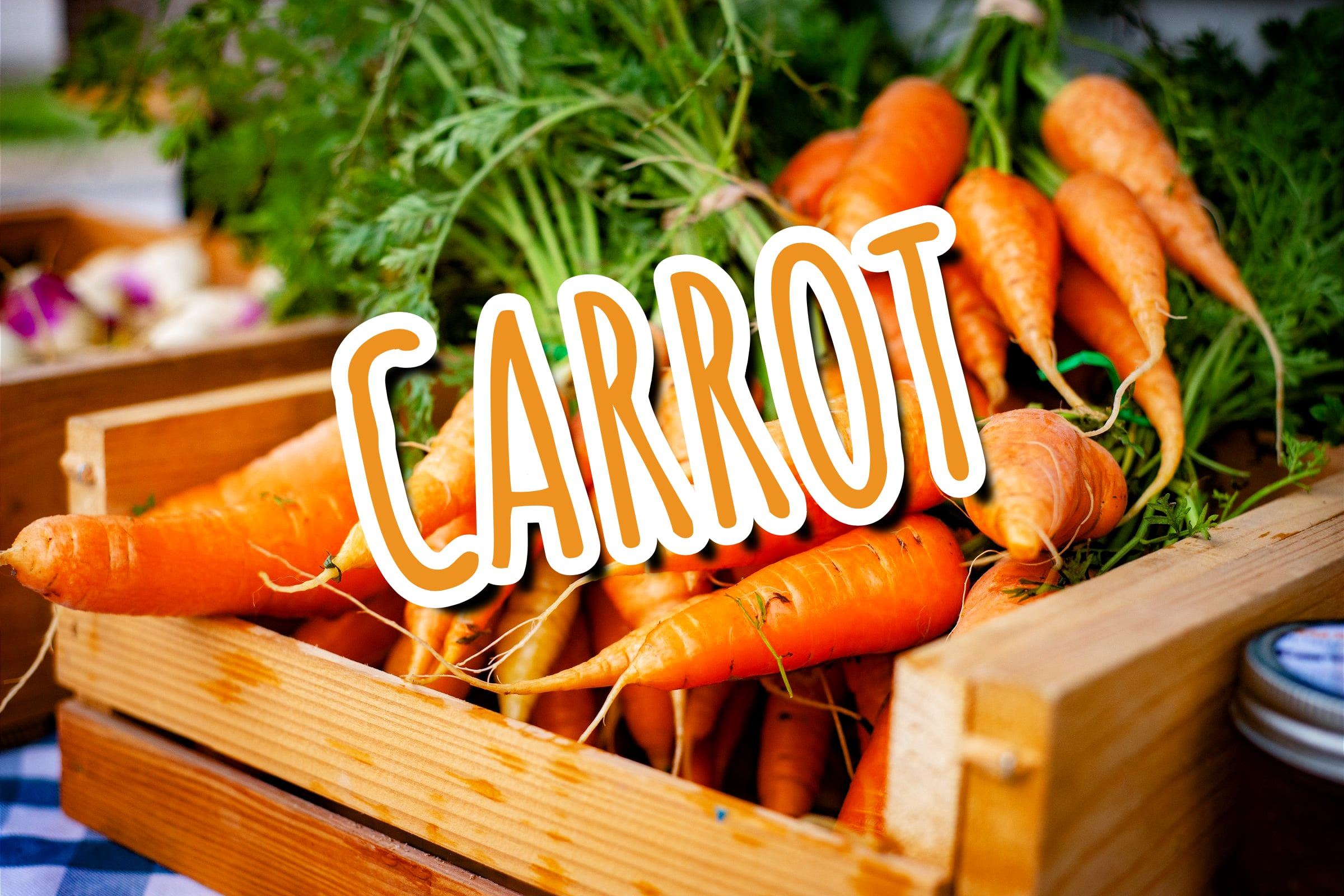 What Is The Carrot Plant?