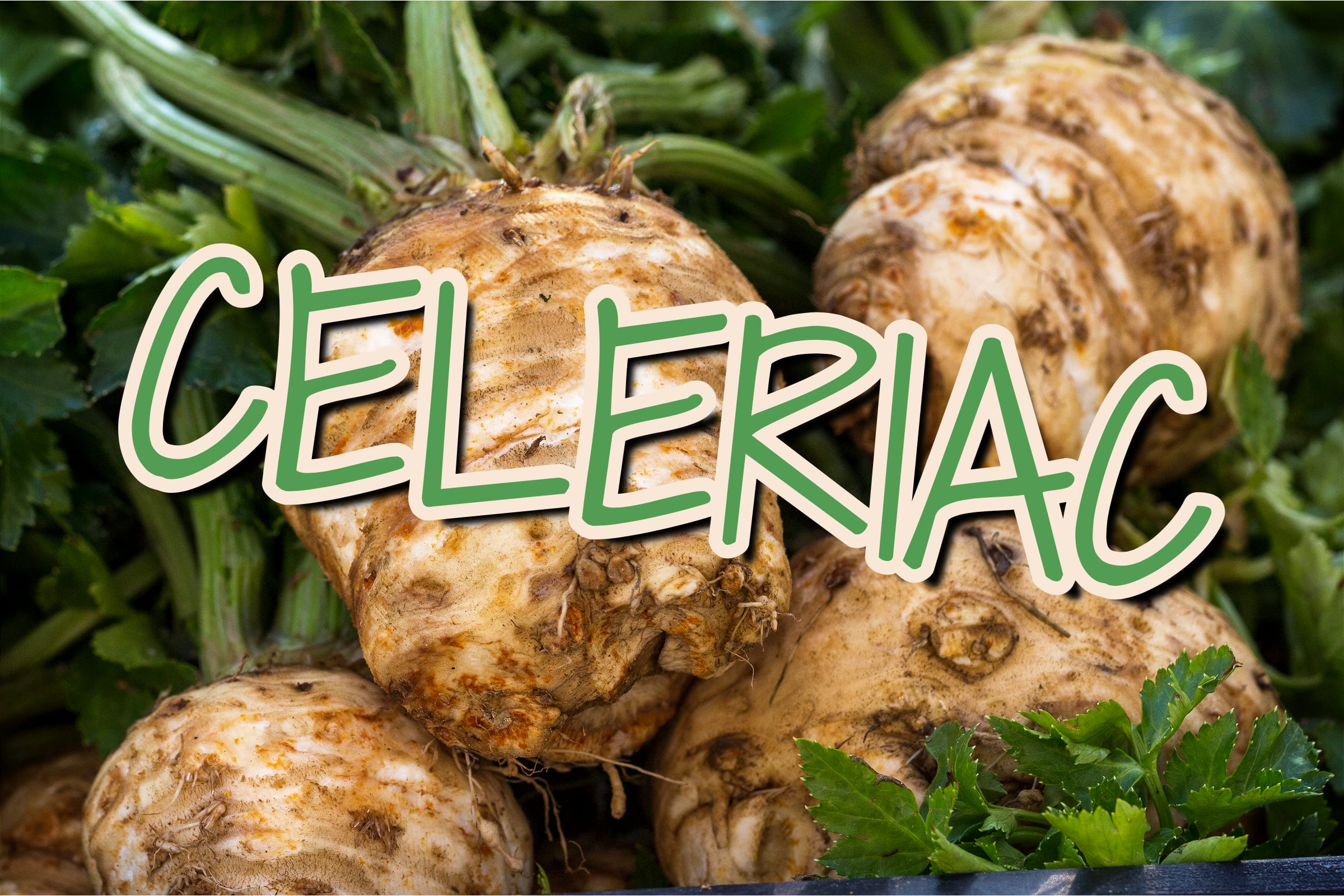 What Is The Celeriac Plant?