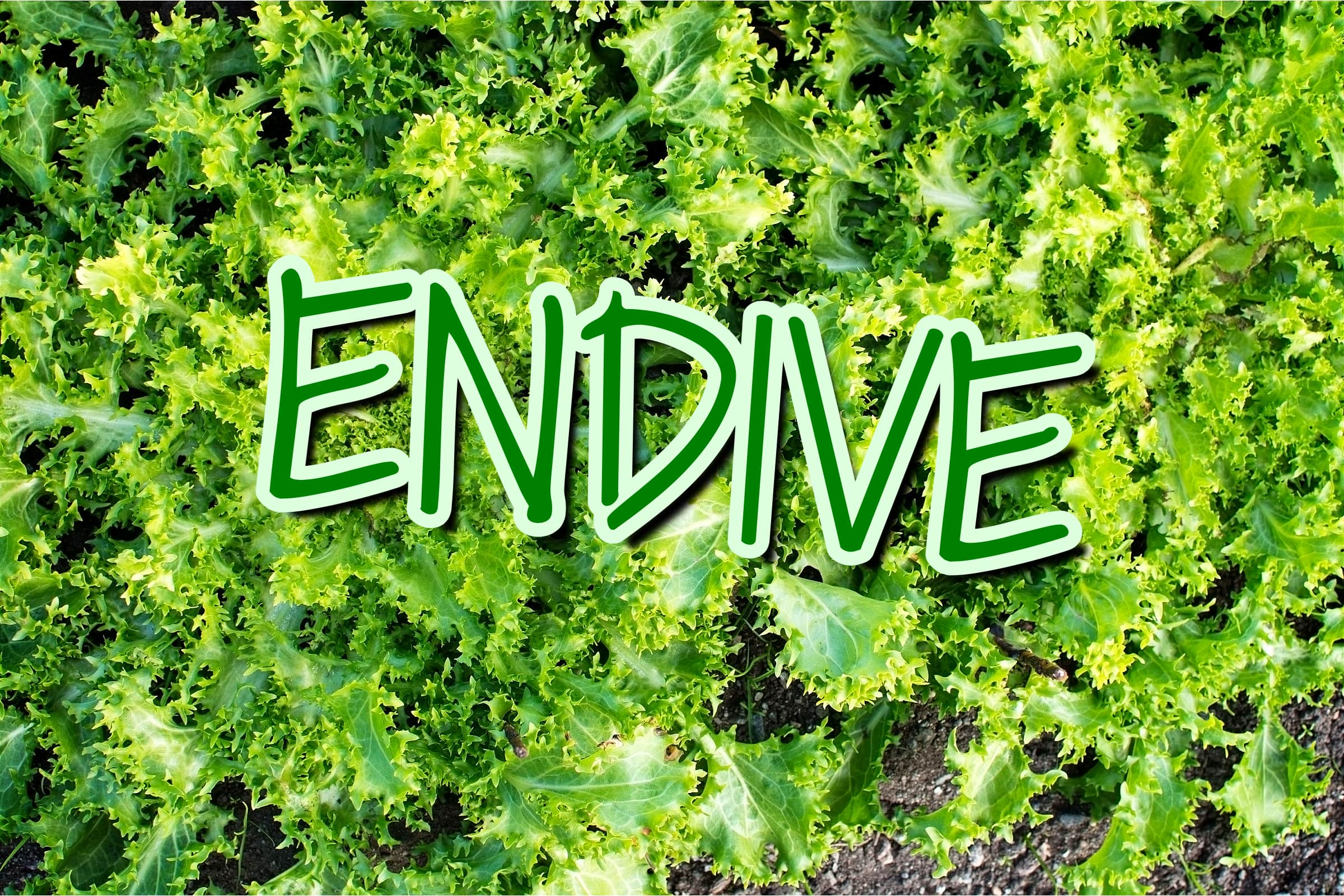 What Is The Endive Plant?