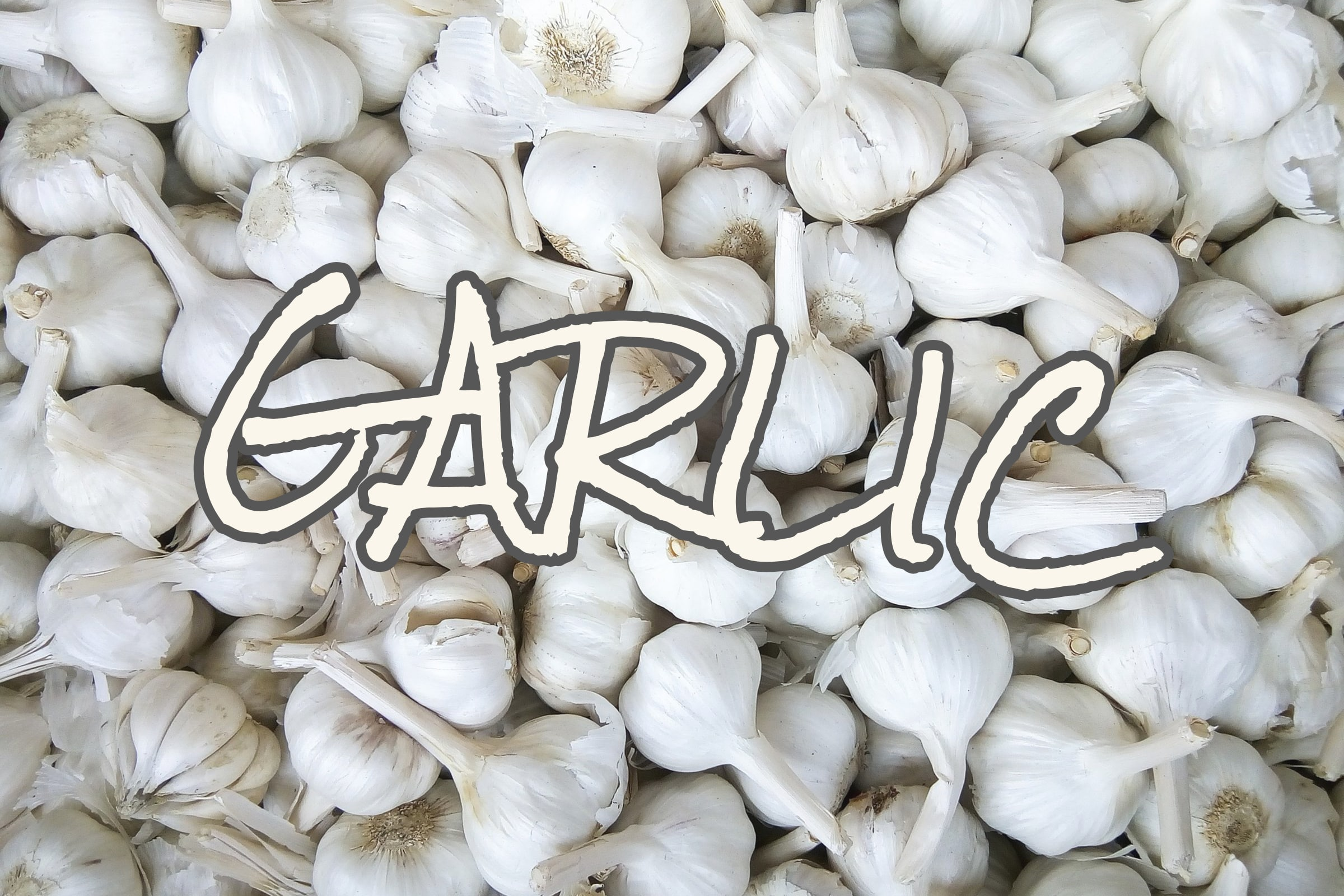 What Is The Garlic Plant?