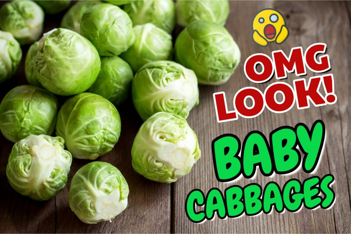 OMG - Brussels Sprouts Are Baby Cabbages