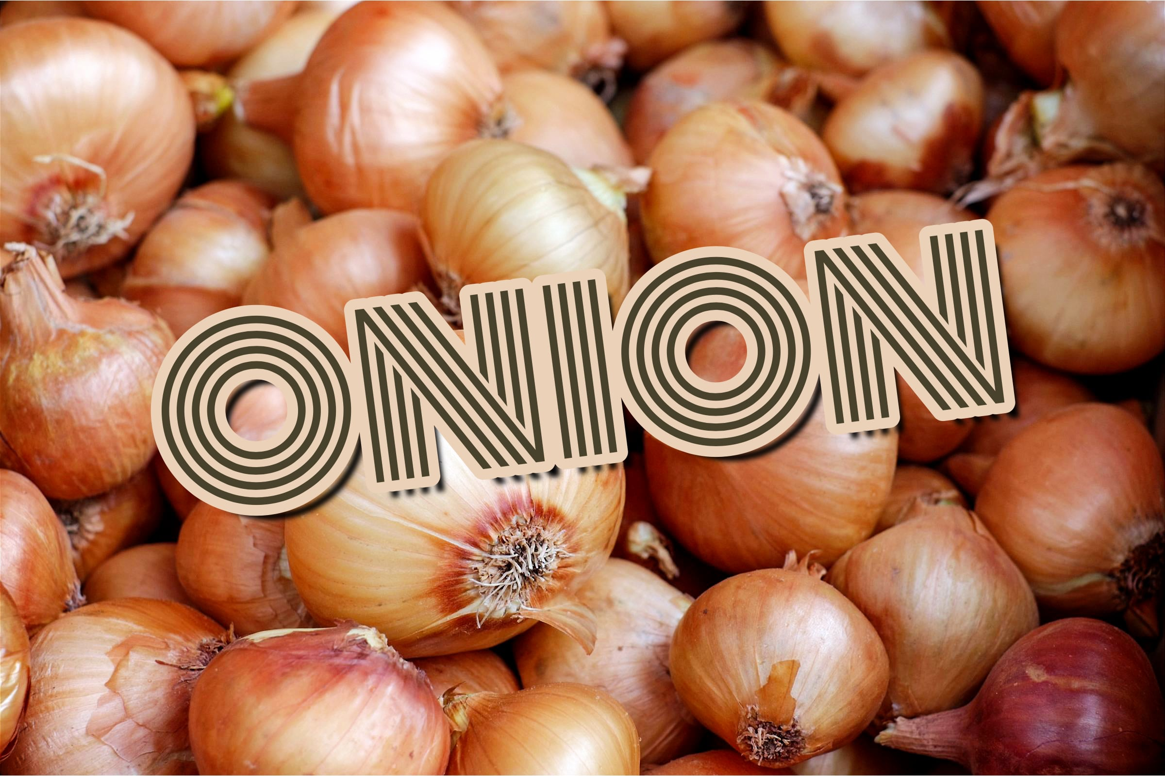 What Is The Onion Plant?