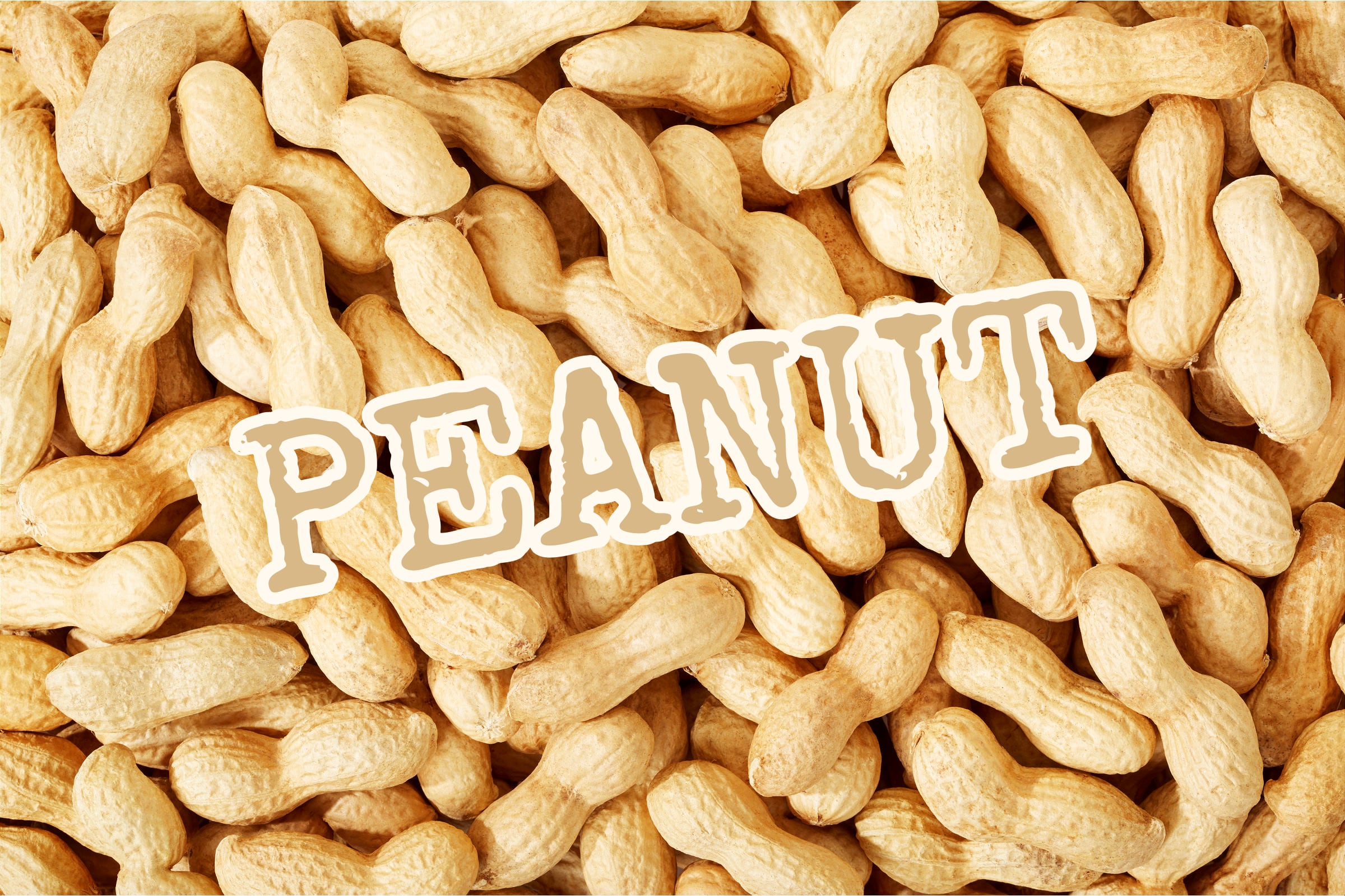 What Is The Peanut Plant?