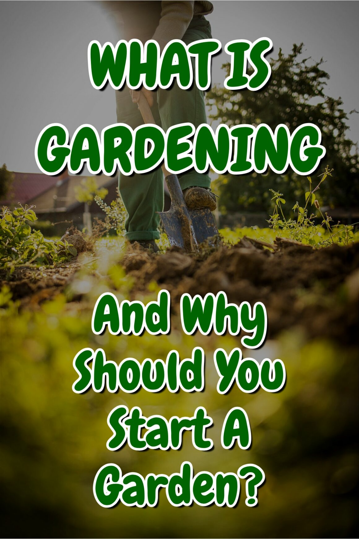 What Is Gardening And Why Should You Start A Garden?