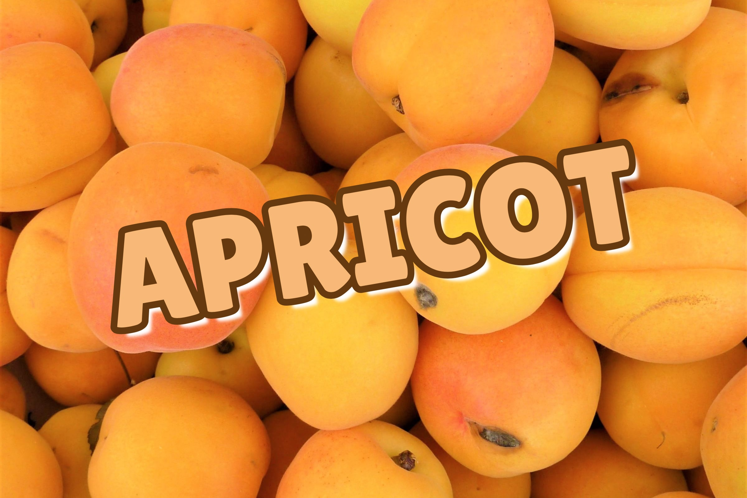 What Is The Apricot Tree?