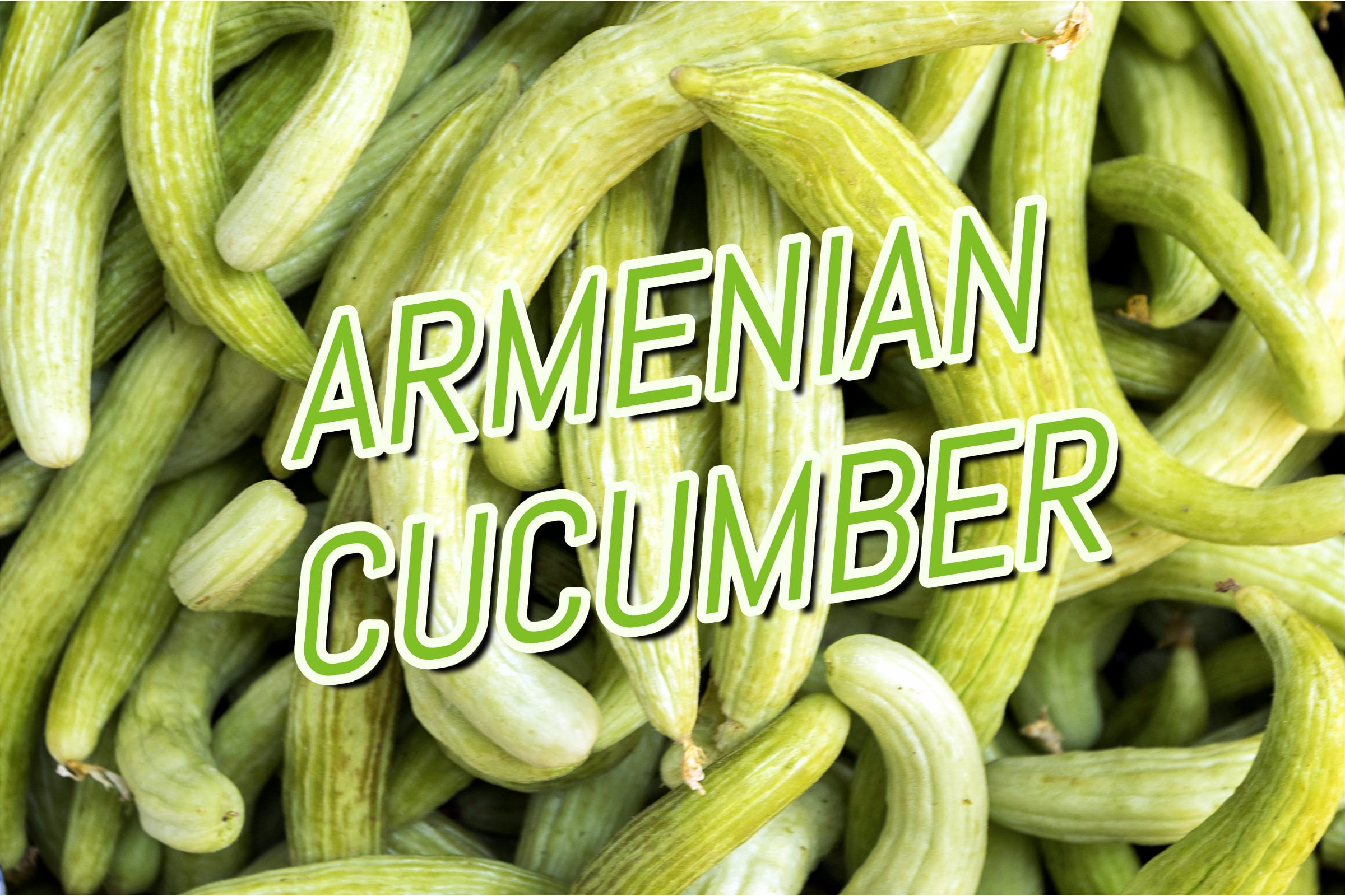 What Is The Armenian Cucumber Plant?