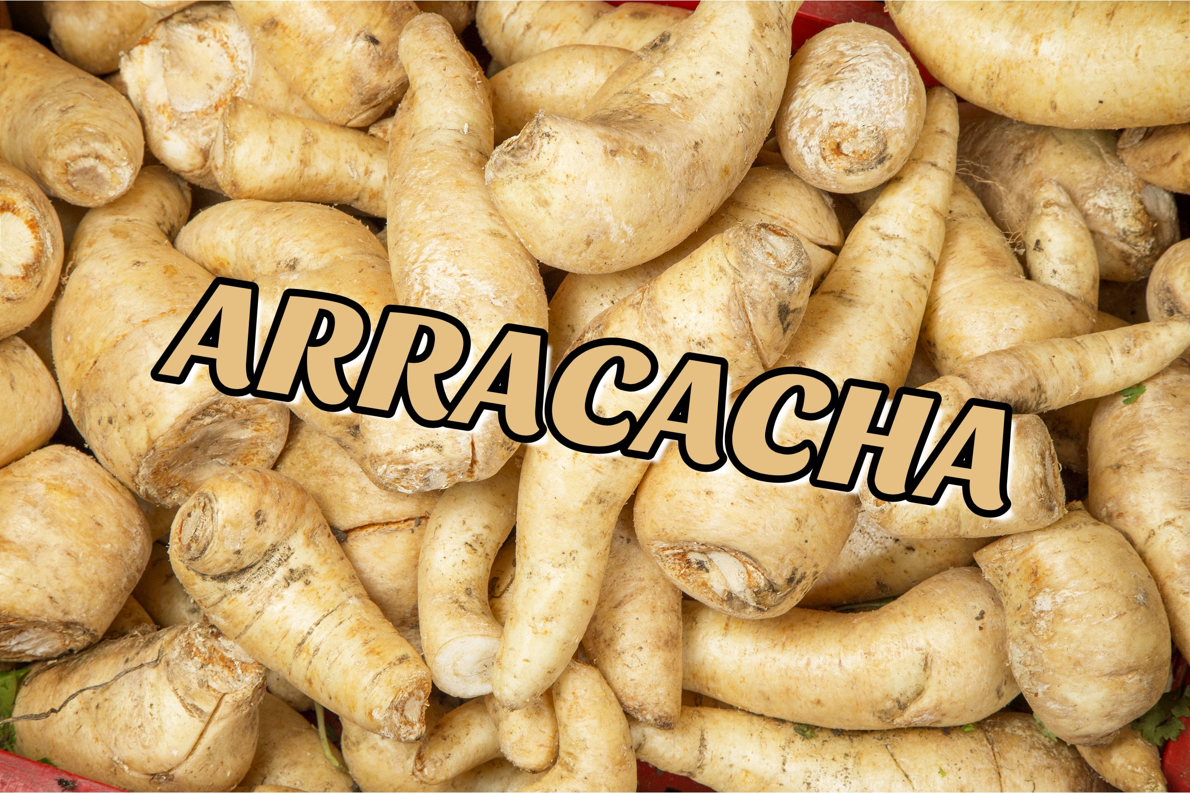What Is The Arracacha Plant?