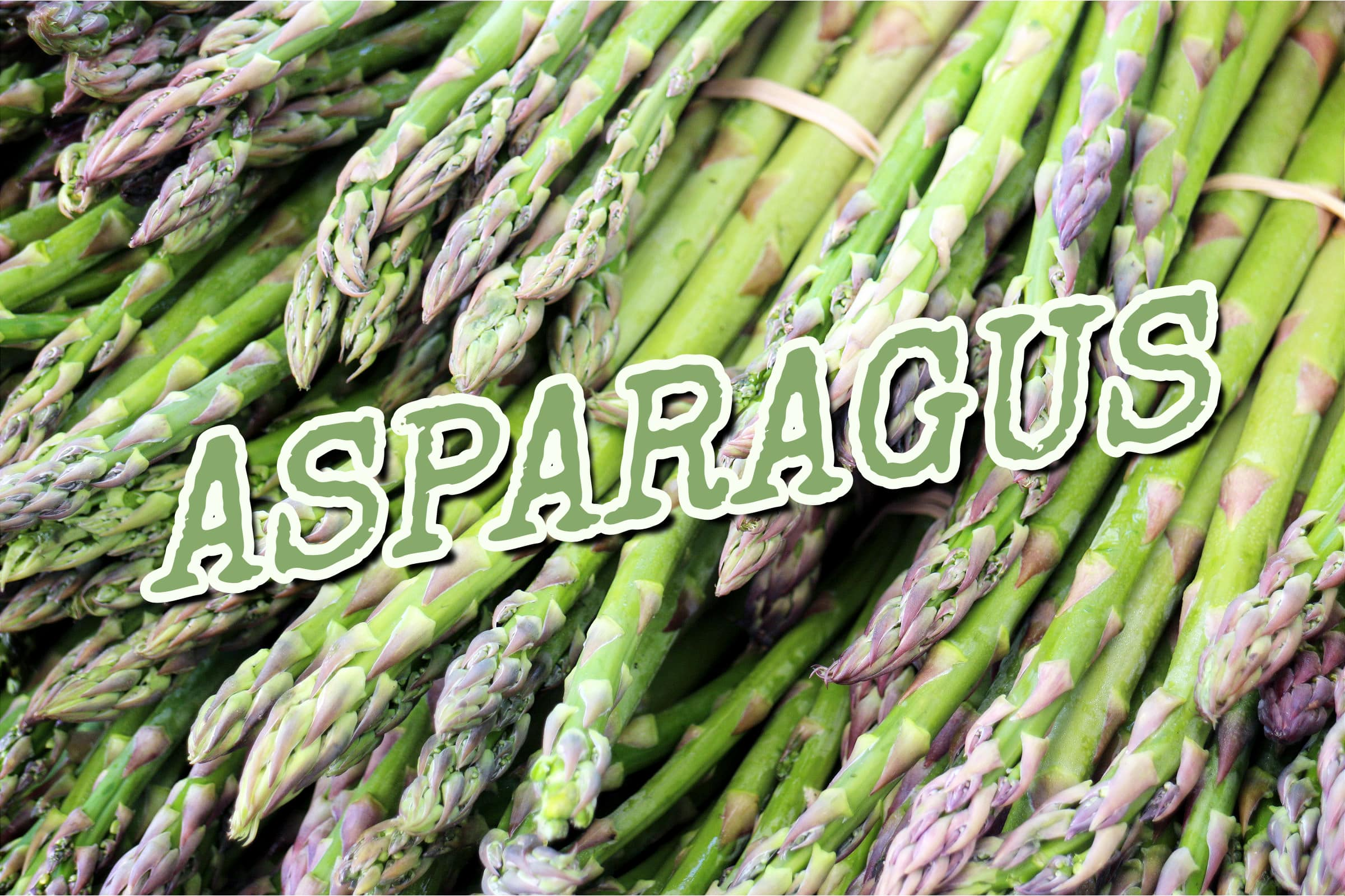 What Is The Asparagus Plant?