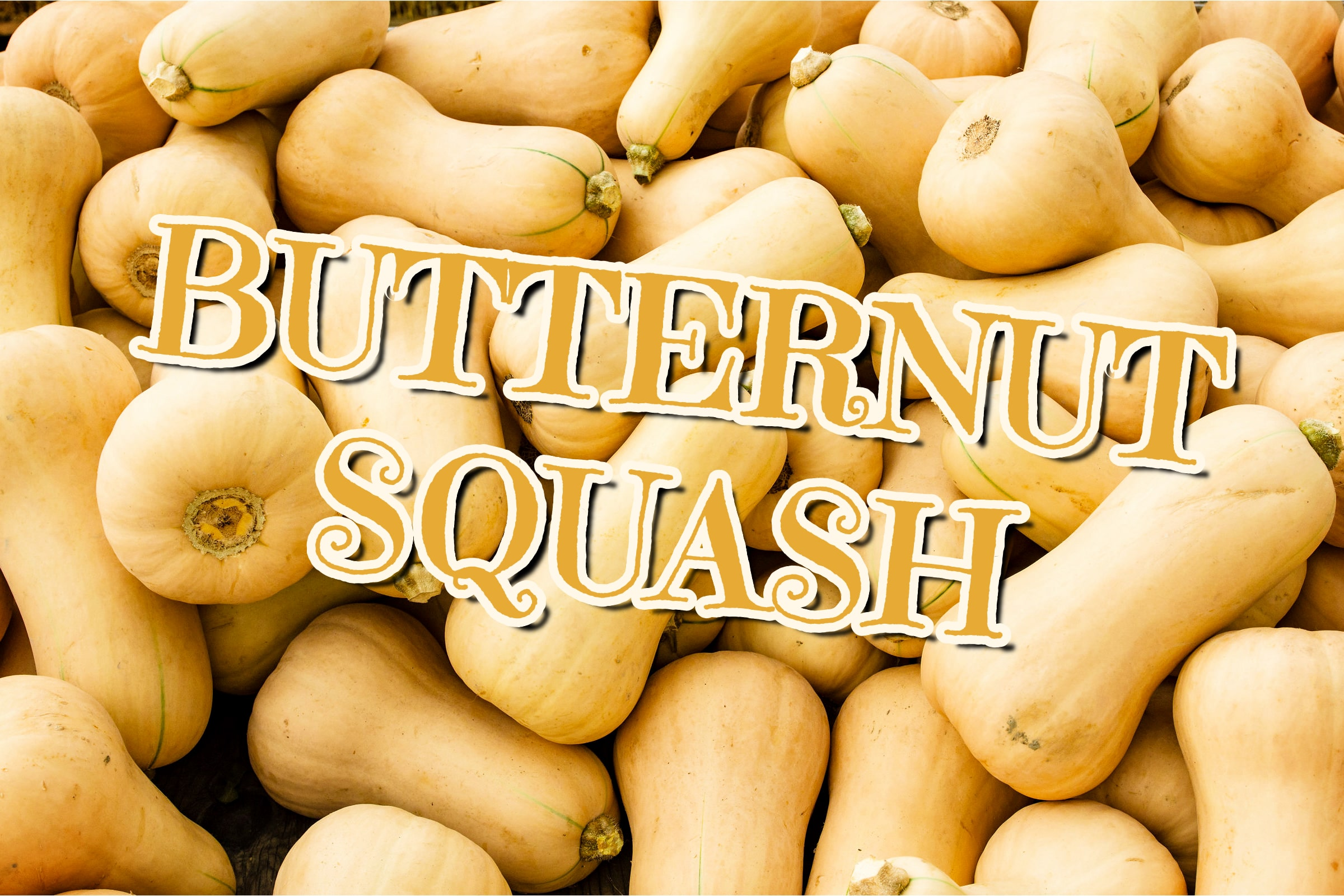 What Is The Butternut Squash Plant?