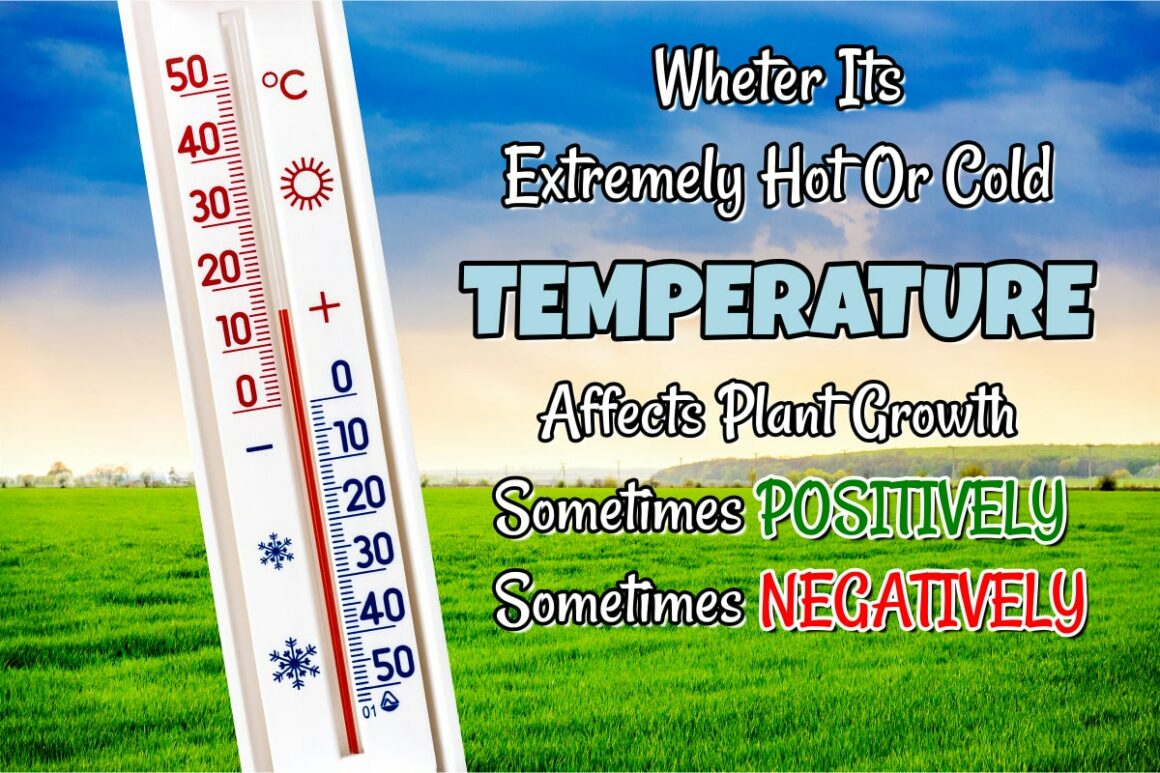 What Plants Need To Grow? Temperature Always Affects Plant Growth